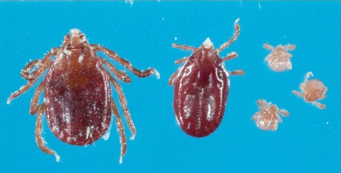 New Ticks in ct that were just founs